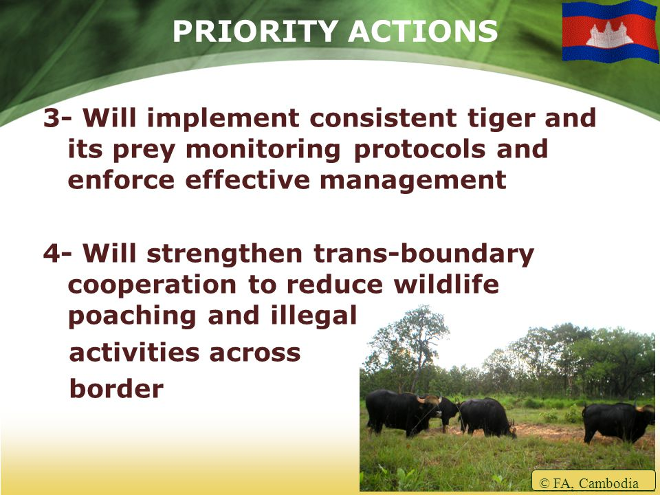 PRIORITY ACTIONS 3- Will implement consistent tiger and its prey monitoring protocols and enforce effective management 4- Will strengthen trans-boundary cooperation to reduce wildlife poaching and illegal activities across border © FA, Cambodia