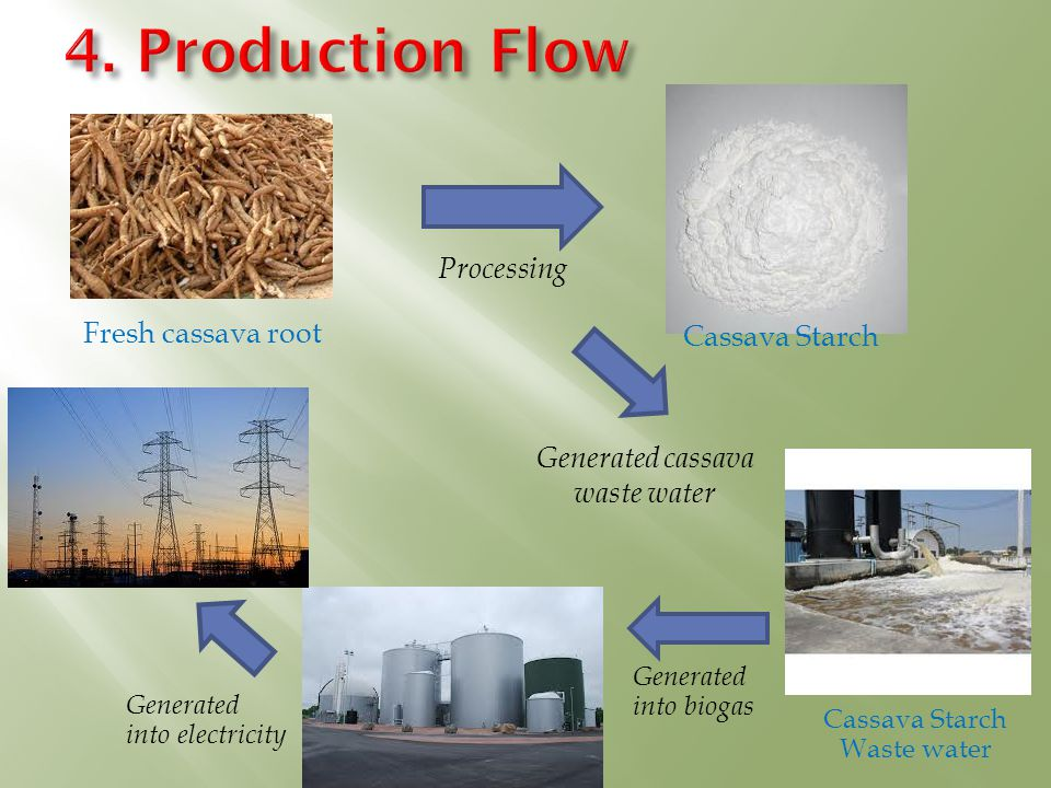 Fresh cassava root Cassava Starch Cassava Starch Waste water Processing Generated into biogas Generated into electricity Generated cassava waste water