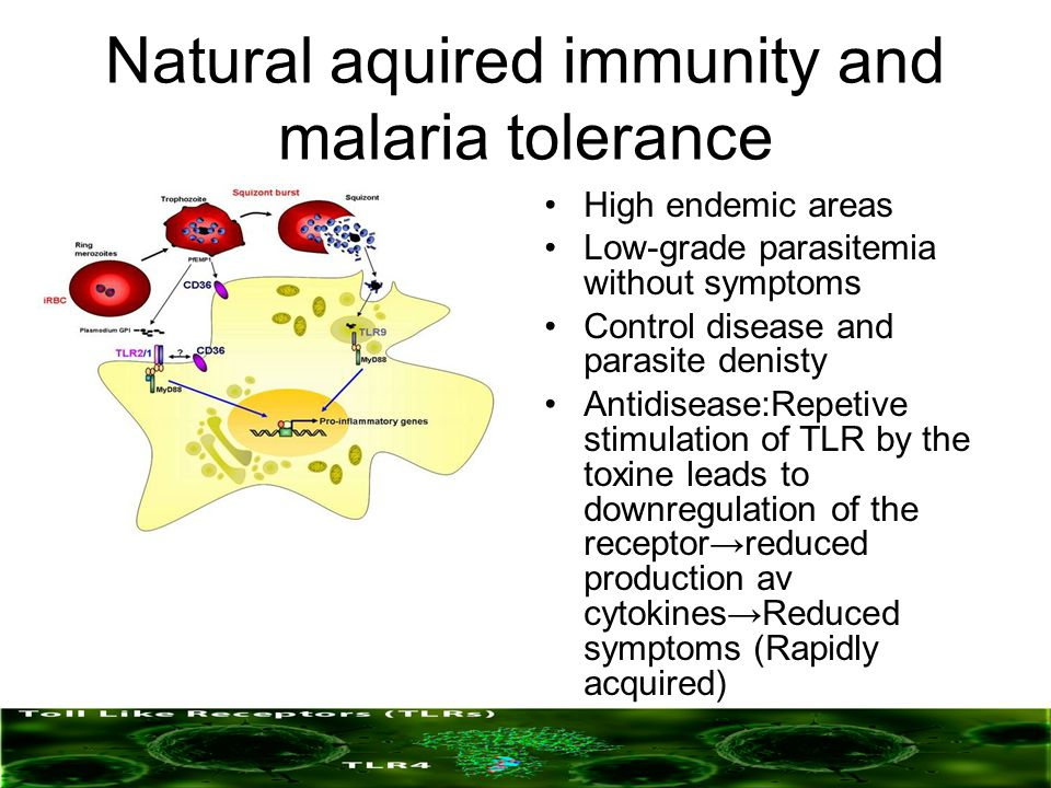 Natural aquired immunity and malaria tolerance High endemic areas Low-grade parasitemia without symptoms Control disease and parasite denisty Antidise
