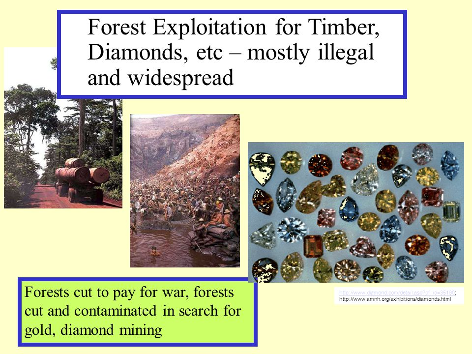 Forests cut to pay for war, forests cut and contaminated in search for gold, diamond mining Forest Exploitation for Timber, Diamonds, etc – mostly ill