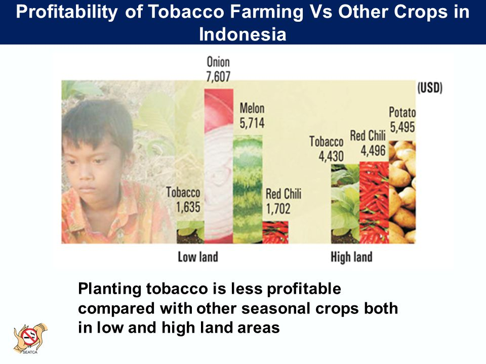 Profitability of Tobacco Farming Vs Other Crops in Indonesia Planting tobacco is less profitable compared with other seasonal crops both in low and high land areas