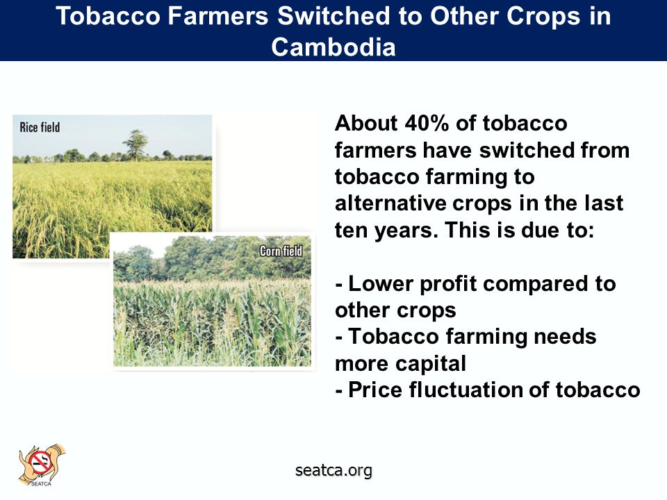 seatca.org Tobacco Farmers Switched to Other Crops in Cambodia About 40% of tobacco farmers have switched from tobacco farming to alternative crops in the last ten years.
