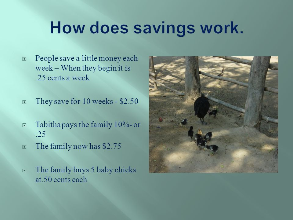  People save a little money each week – When they begin it is.25 cents a week  They save for 10 weeks - $2.50  Tabitha pays the family 10%- or.25  The family now has $2.75  The family buys 5 baby chicks at.50 cents each
