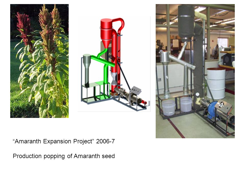 Amaranth Expansion Project 2006-7 Production popping of Amaranth seed
