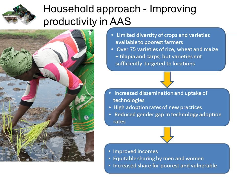 Household approach - Improving productivity in AAS Limited diversity of crops and varieties available to poorest farmers Over 75 varieties of rice, wh