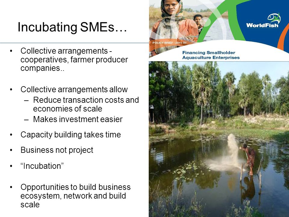 Incubating SMEs… Collective arrangements - cooperatives, farmer producer companies.. Collective arrangements allow –Reduce transaction costs and econo