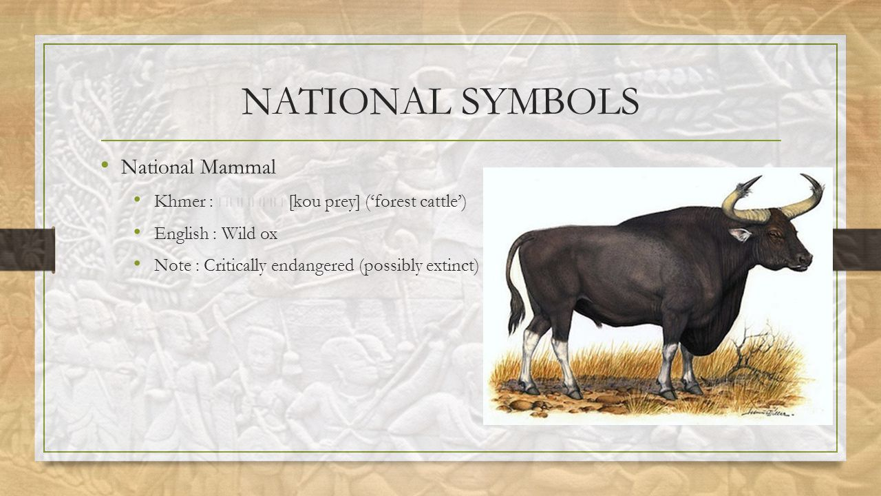 NATIONAL SYMBOLS National Mammal Khmer : [kou prey] ('forest cattle') English : Wild ox Note : Critically endangered (possibly extinct)