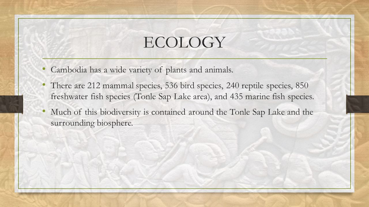 ECOLOGY Cambodia has a wide variety of plants and animals.