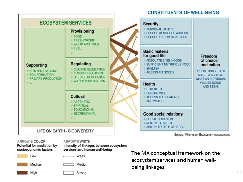 18 The MA conceptual framework on the ecosystem services and human well- being linkages
