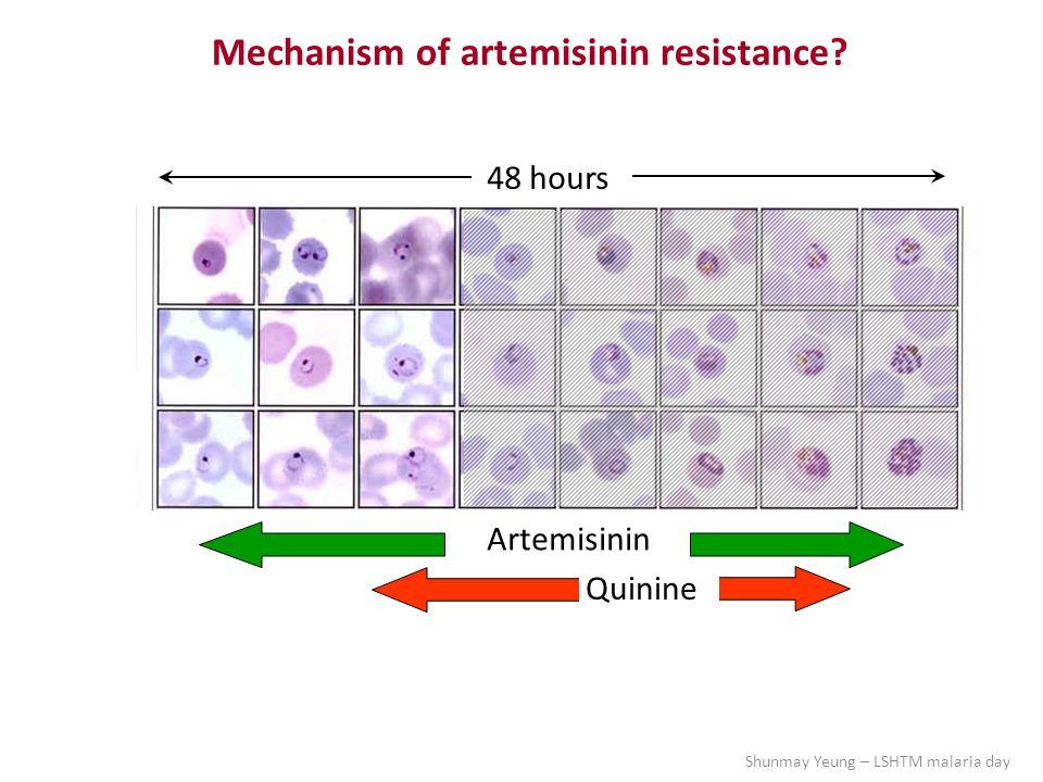 Artemisinin Quinine 48 hours Mechanism of artemisinin resistance Shunmay Yeung – LSHTM malaria day