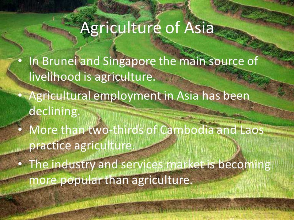 Agriculture of Asia In Brunei and Singapore the main source of livelihood is agriculture. Agricultural employment in Asia has been declining. More tha
