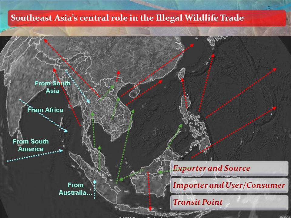 5 Southeast Asia's central role in the Illegal Wildlife Trade Exporter and SourceImporter and User/ConsumerTransit Point From Africa From South America From Australia… From South Asia