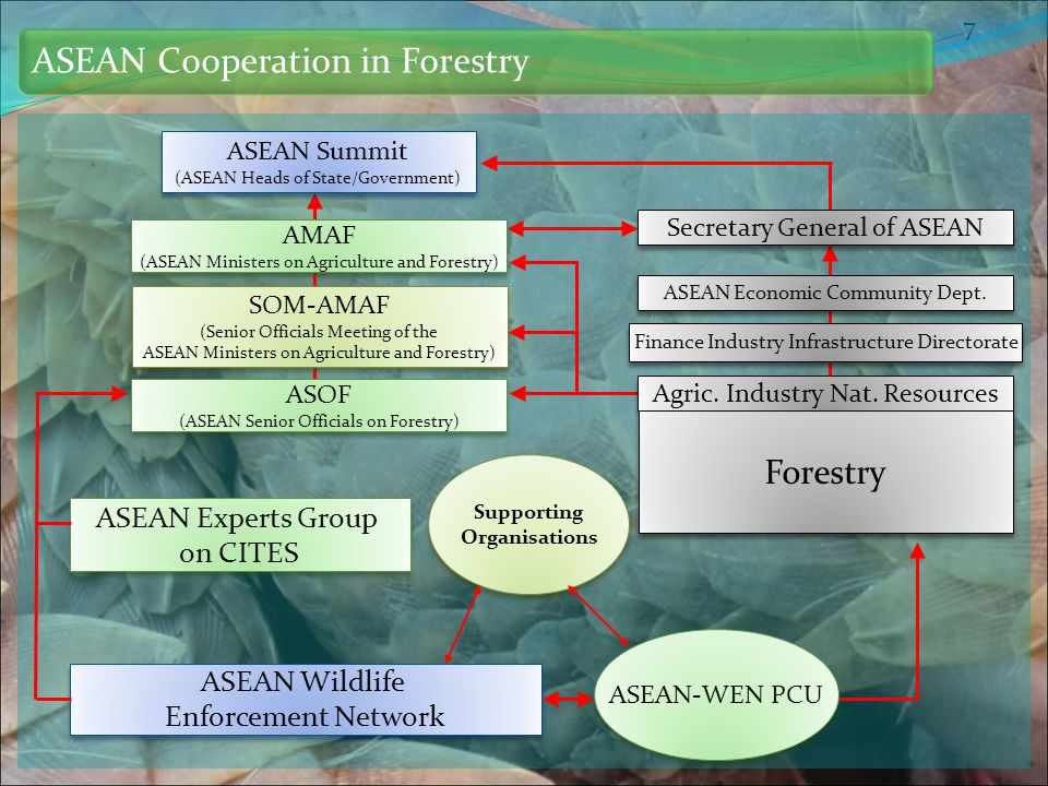 Establishment and strengthening of national wildlife law enforcement agencies, task forces and inter- agency cooperation consisting of officials from CITES Management Authorities, Customs, police, prosecutors, specialized governmental wildlife-law enforcement organizations and other relevant national law enforcement agencies, for the effective enforcement of legislation governing the conservation, trade and sustainable use of wild fauna and flora, the implementation of ASEAN-WEN objectives, and collaboration in cross-border cooperation and coordination to enforce such legislation NATIONAL TASK FORCES AND INTER- AGENCY COOPERATION ON WILDLIFE ENFORCEMENT Conduct awareness raising programmes, such as the production of publications and other promotional materials to raise the awareness of wildlife crime and illicit trade in wild fauna and flora PUBLIC AWARENESS Produce training materials on combating wildlife crime and illicit trade in wild fauna and flora, and organize training activities for wildlife and other law enforcement officers or participate in relevant training seminars for enforcement personnel CAPACITY BUILDING Improve collaboration, cooperation and information exchange between and among law enforcement agencies and national task forces COLLABORATION, COOPERATION, INFORMATION SHARING AND EXCHANGE ASEAN-WEN General Objectives based on its TOR