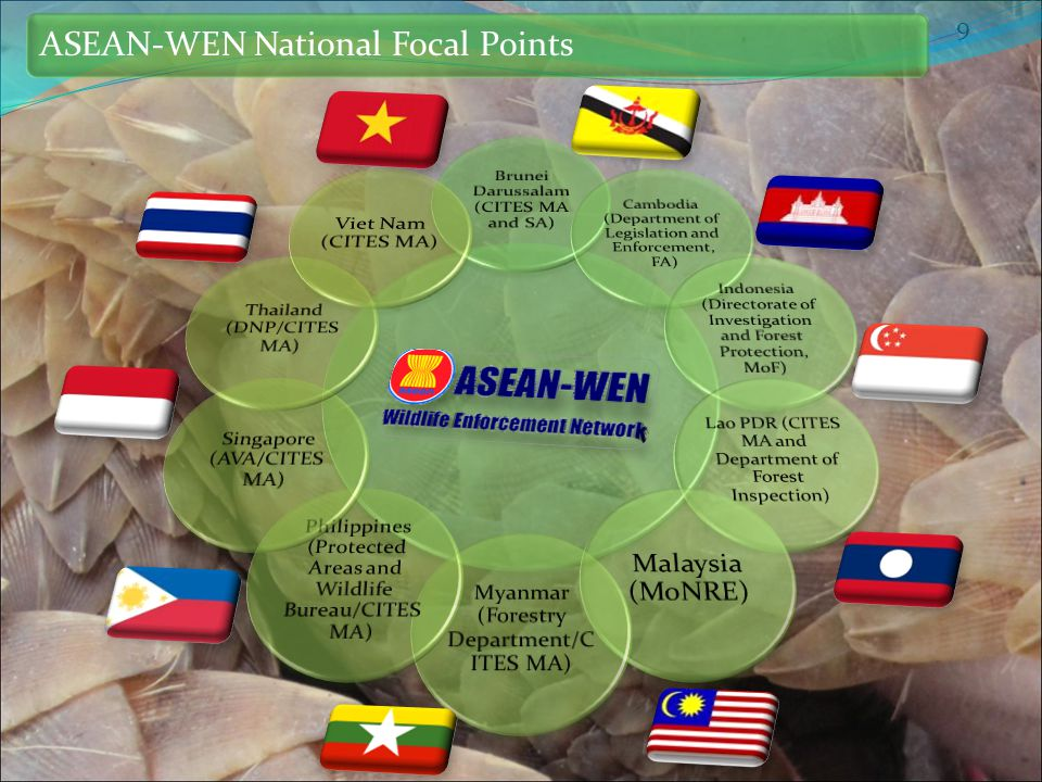 9 ASEAN-WEN National Focal Points