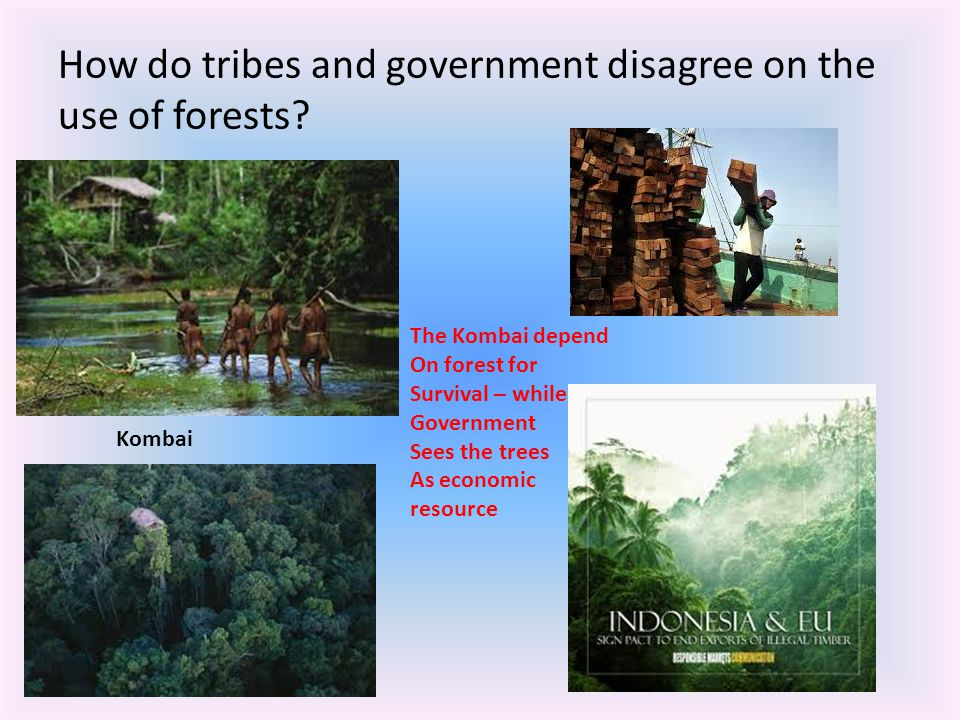 How do tribes and government disagree on the use of forests? Kombai The Kombai depend On forest for Survival – while Government Sees the trees As econ
