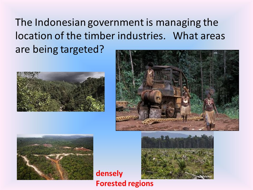 The Indonesian government is managing the location of the timber industries. What areas are being targeted? densely Forested regions