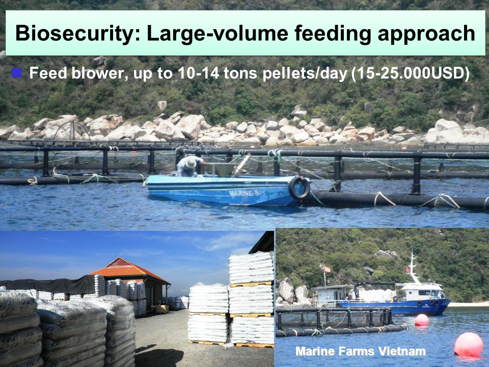 Feed blower, up to 10-14 tons pellets/day (15-25.000USD) Marine Farms Vietnam
