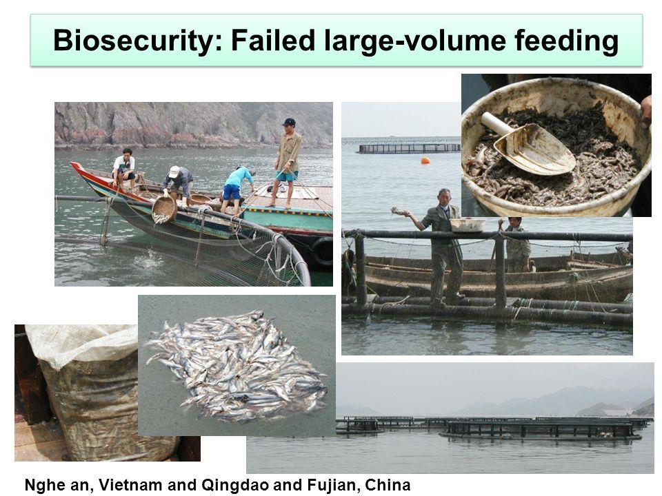 Biosecurity: Failed large-volume feeding Nghe an, Vietnam and Qingdao and Fujian, China