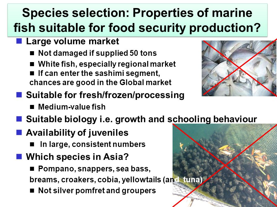 Species selection: Properties of marine fish suitable for food security production? Large volume market Not damaged if supplied 50 tons White fish, es