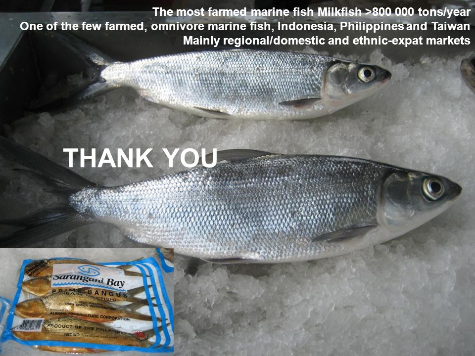 THANK YOU The most farmed marine fish Milkfish >800 000 tons/year One of the few farmed, omnivore marine fish, Indonesia, Philippines and Taiwan Mainl