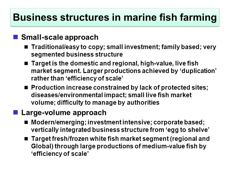 Business structures in marine fish farming Small-scale approach Traditional/easy to copy; small investment; family based; very segmented business stru