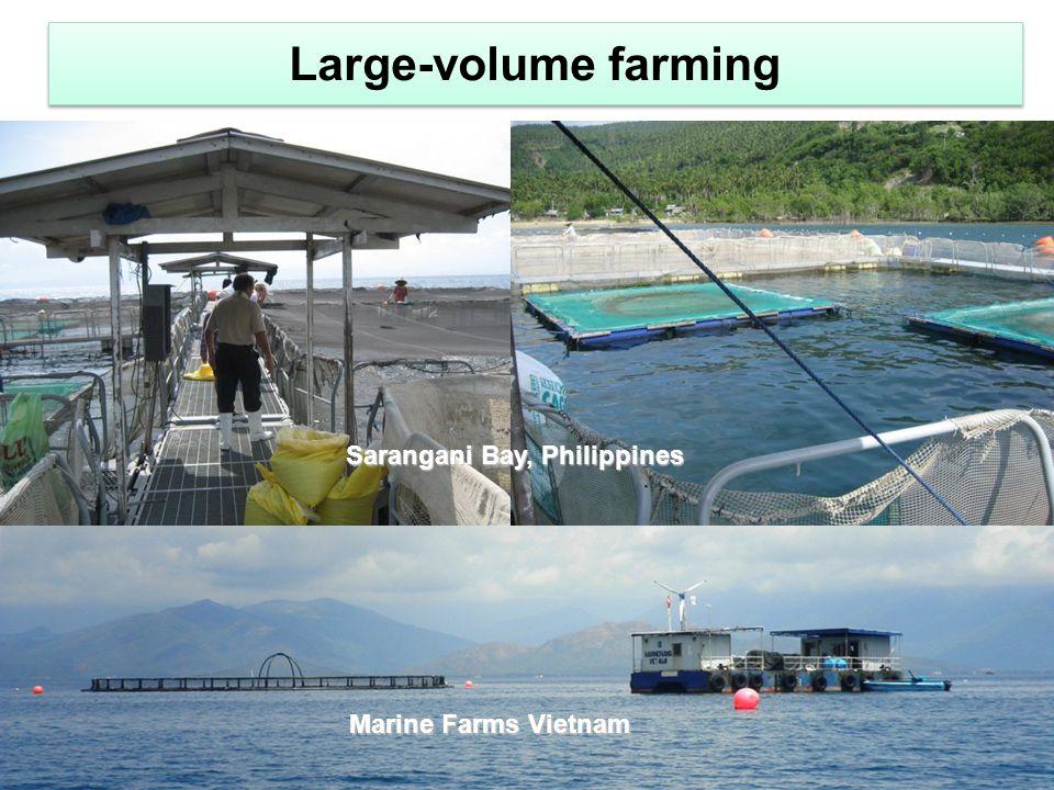 Large-volume farming Sarangani Bay, Philippines Marine Farms Vietnam