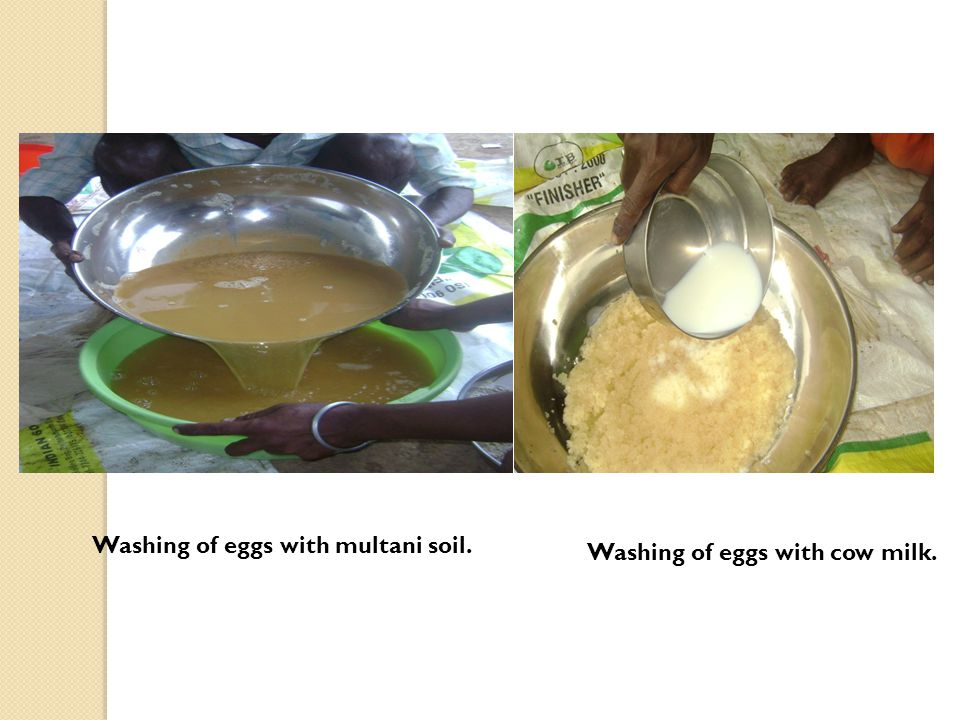 Washing of eggs with multani soil. Washing of eggs with cow milk.