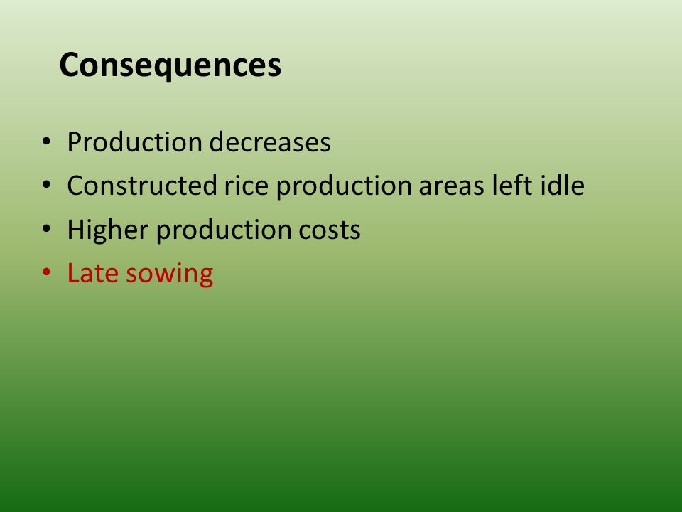 Consequences Production decreases Constructed rice production areas left idle Higher production costs Late sowing
