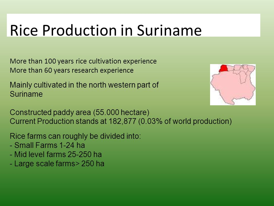 o Rice Production in Suriname More than 100 years rice cultivation experience More than 60 years research experience Mainly cultivated in the north western part of Suriname Constructed paddy area (55.000 hectare) Current Production stands at 182,877 (0.03% of world production) Rice farms can roughly be divided into: - Small Farms 1-24 ha - Mid level farms 25-250 ha - Large scale farms> 250 ha