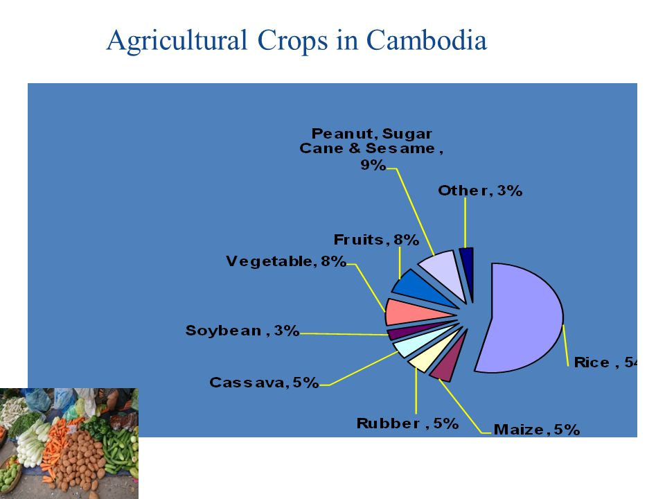 Agricultural Crops in Cambodia