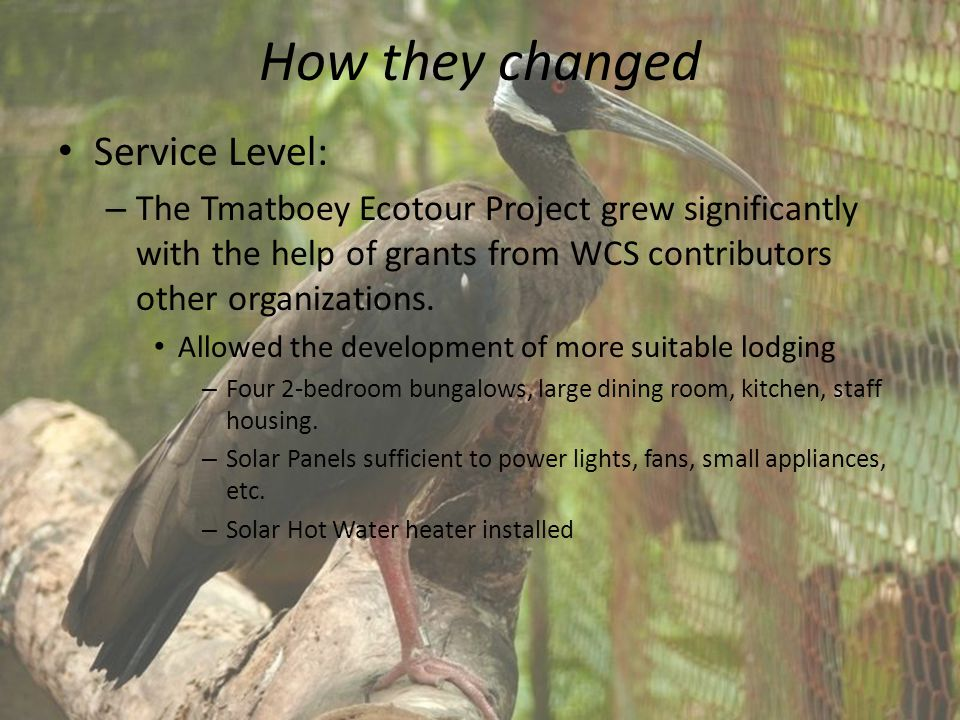 How they changed Service Level: – The Tmatboey Ecotour Project grew significantly with the help of grants from WCS contributors other organizations.