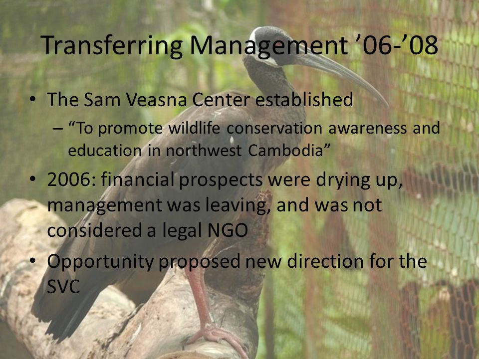 Transferring Management '06-'08 The Sam Veasna Center established – To promote wildlife conservation awareness and education in northwest Cambodia 2006: financial prospects were drying up, management was leaving, and was not considered a legal NGO Opportunity proposed new direction for the SVC