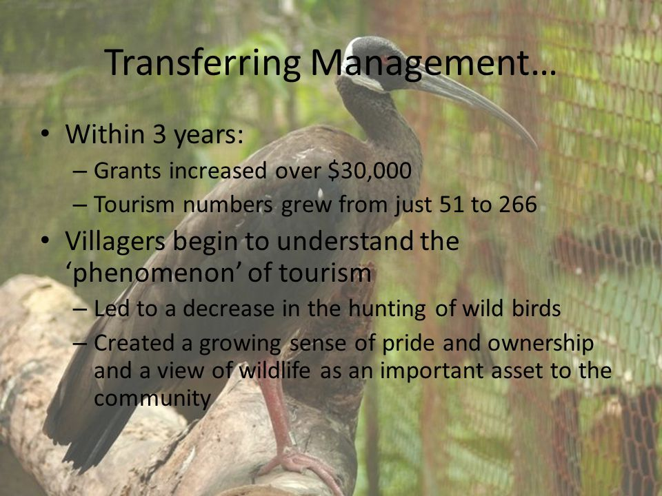 Transferring Management… Within 3 years: – Grants increased over $30,000 – Tourism numbers grew from just 51 to 266 Villagers begin to understand the 'phenomenon' of tourism – Led to a decrease in the hunting of wild birds – Created a growing sense of pride and ownership and a view of wildlife as an important asset to the community