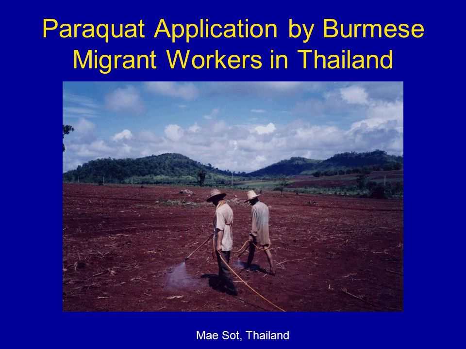 Paraquat Application by Burmese Migrant Workers in Thailand Mae Sot, Thailand