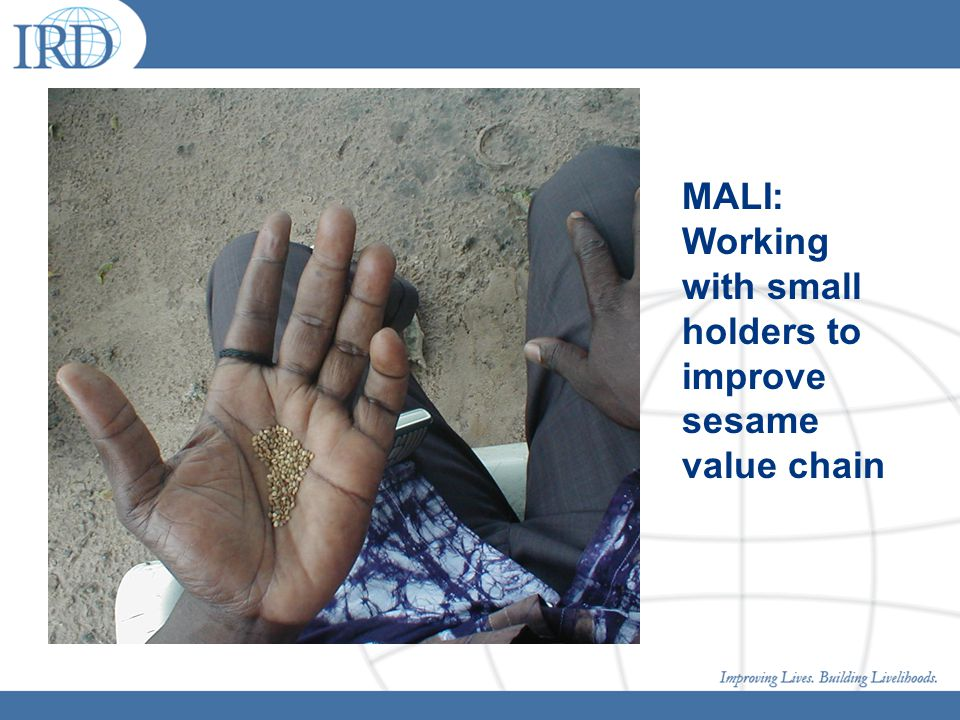 MALI: Working with small holders to improve sesame value chain