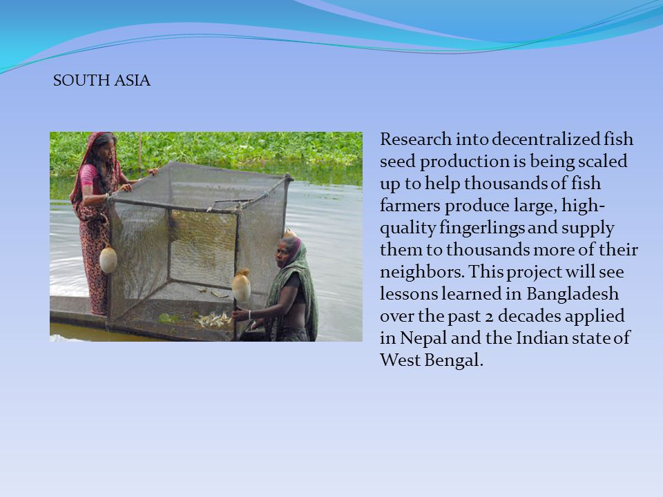 With the International Rice Research Institute, BFRI and Vietnamese Research Institute for Aquaculture No.