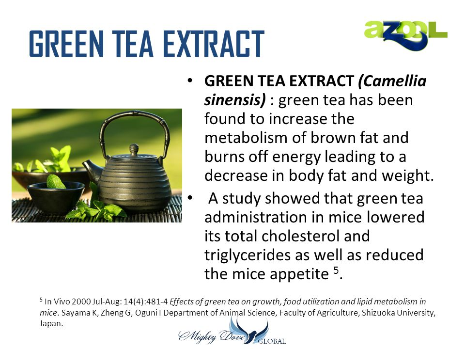 GREEN TEA EXTRACT GREEN TEA EXTRACT (Camellia sinensis) : green tea has been found to increase the metabolism of brown fat and burns off energy leading to a decrease in body fat and weight.