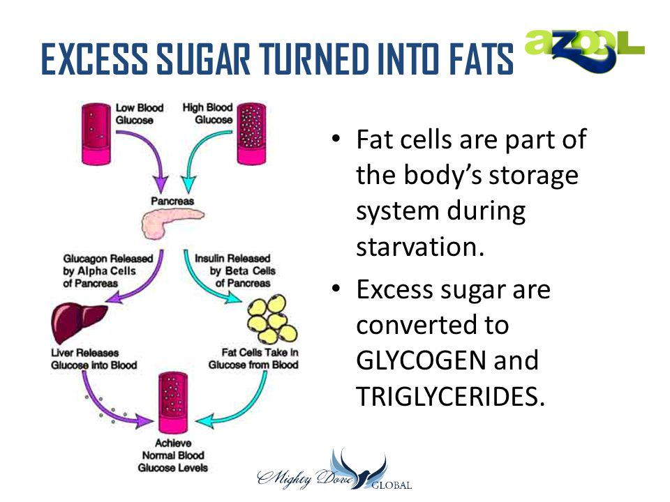EXCESS SUGAR TURNED INTO FATS Fat cells are part of the body's storage system during starvation. Excess sugar are converted to GLYCOGEN and TRIGLYCERI