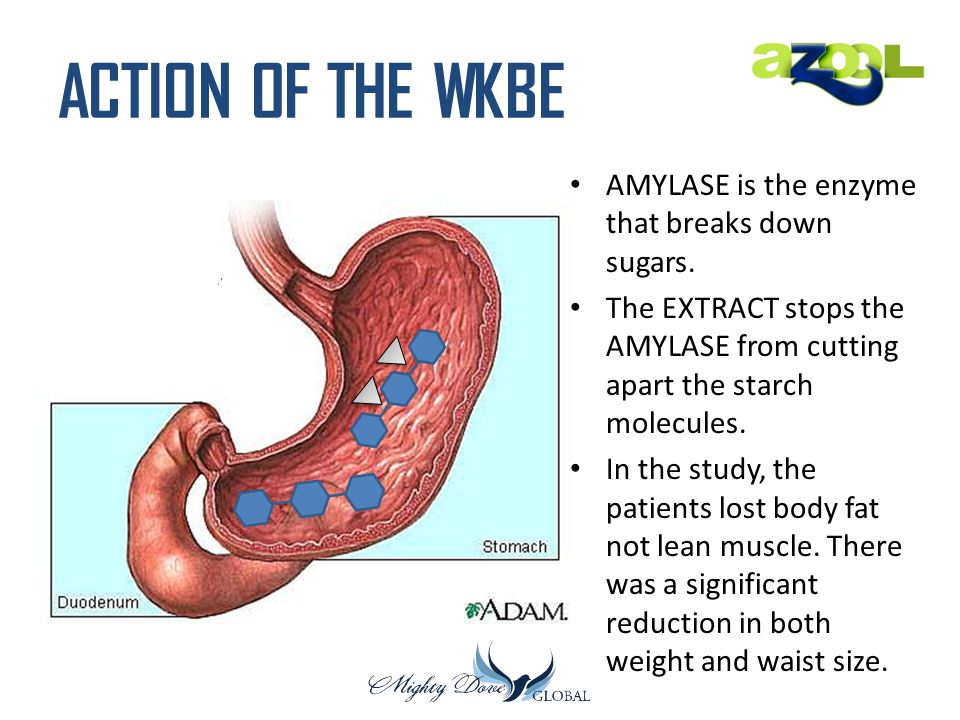 ACTION OF THE WKBE AMYLASE is the enzyme that breaks down sugars. The EXTRACT stops the AMYLASE from cutting apart the starch molecules. In the study,