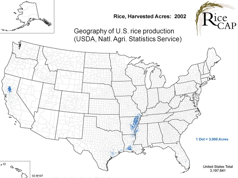 Geography of U.S. rice production (USDA, Natl. Agri. Statistics Service)