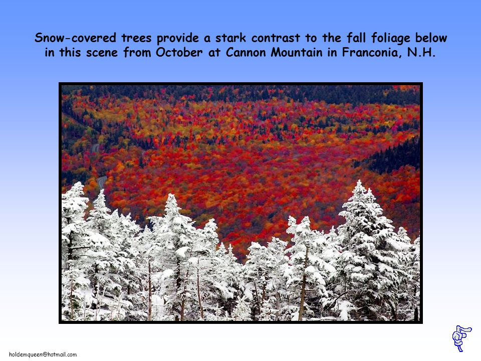 holdemqueen@hotmail.com Snow-covered trees provide a stark contrast to the fall foliage below in this scene from October at Cannon Mountain in Franconia, N.H.