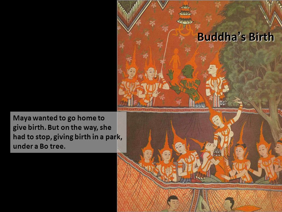 Buddha's Birth Maya wanted to go home to give birth. But on the way, she had to stop, giving birth in a park, under a Bo tree.