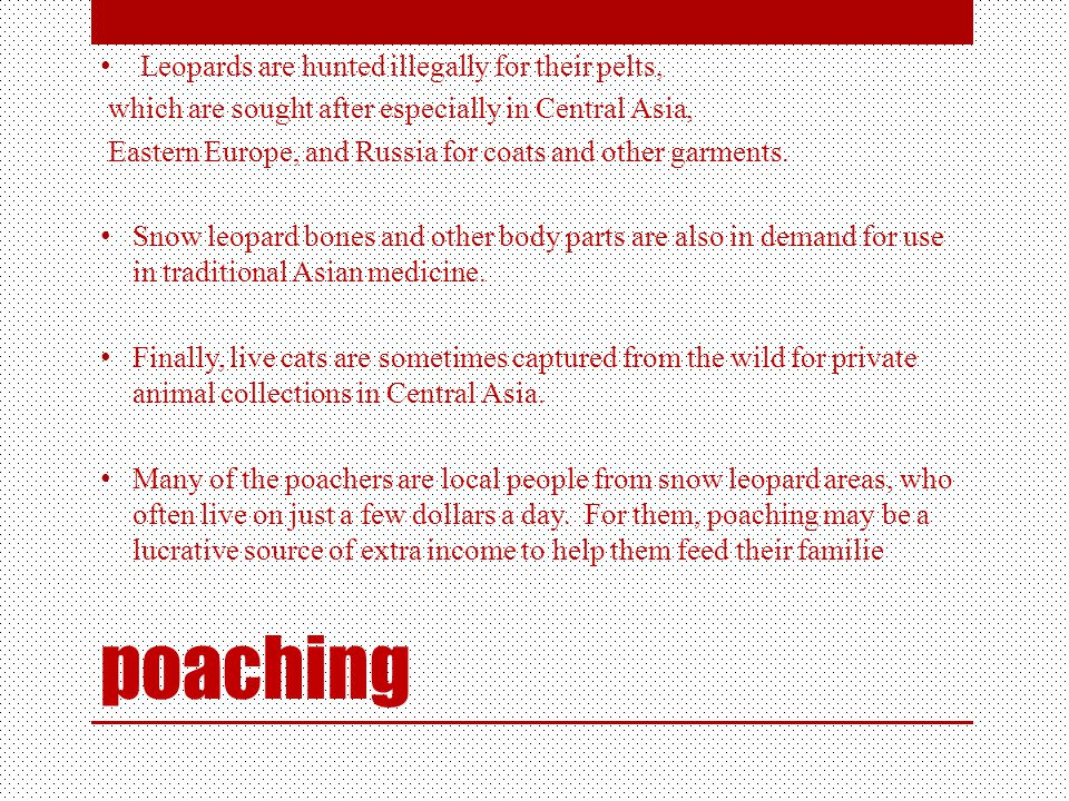 poaching Leopards are hunted illegally for their pelts, which are sought after especially in Central Asia, Eastern Europe, and Russia for coats and other garments.