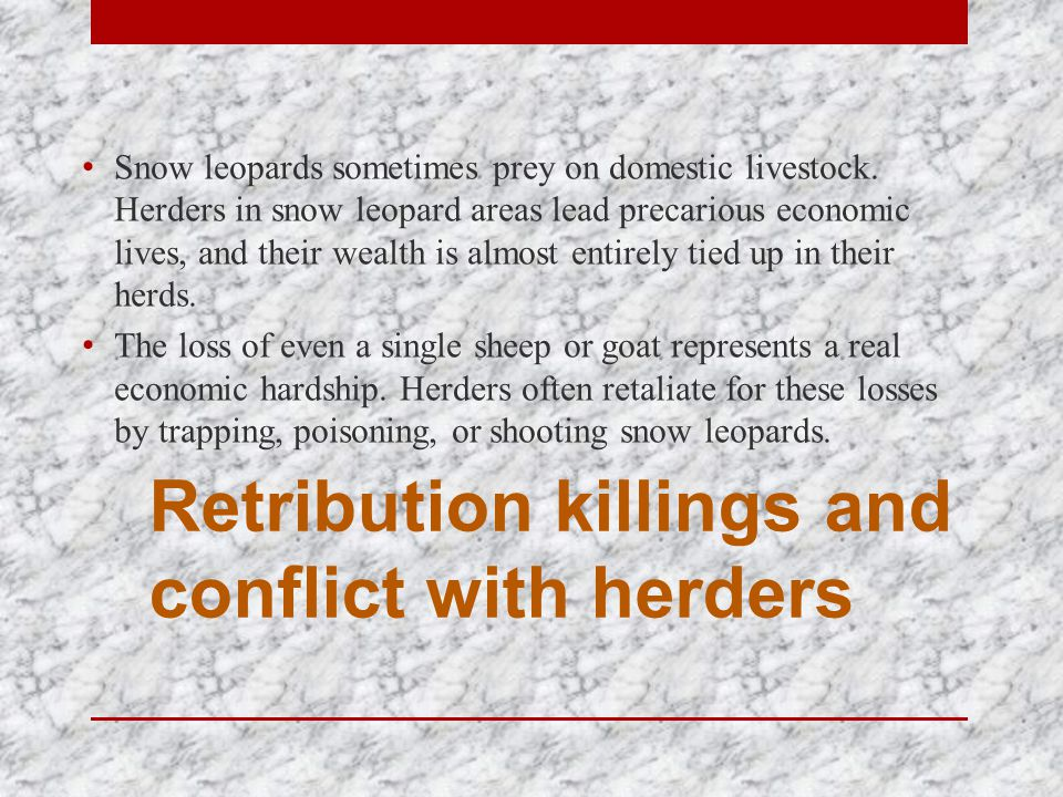 Retribution killings and conflict with herders Snow leopards sometimes prey on domestic livestock.