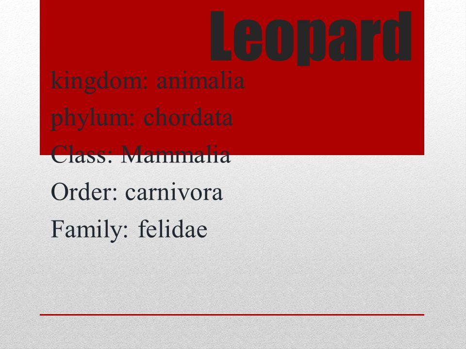 Leopard kingdom: animalia phylum: chordata Class: Mammalia Order: carnivora Family: felidae