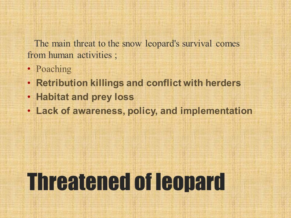 Threatened of leopard The main threat to the snow leopard s survival comes from human activities ; Poaching Retribution killings and conflict with herders Habitat and prey loss Lack of awareness, policy, and implementation