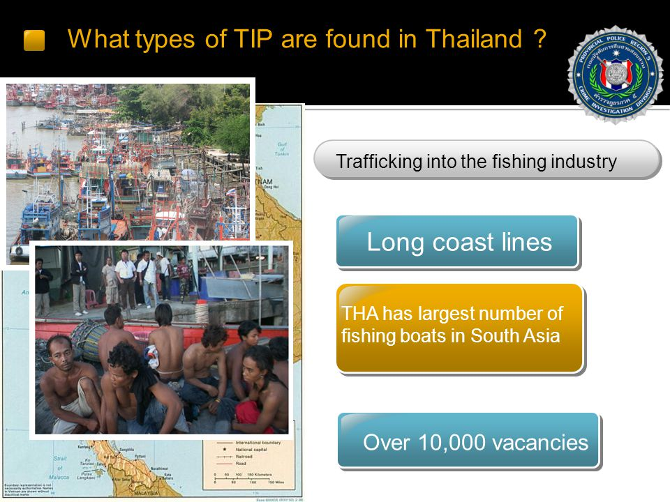 What types of TIP are found in Thailand .