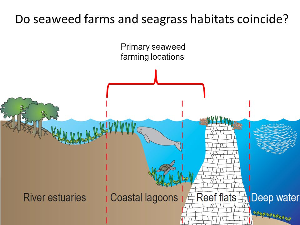 Do seaweed farms and seagrass habitats coincide Primary seaweed farming locations