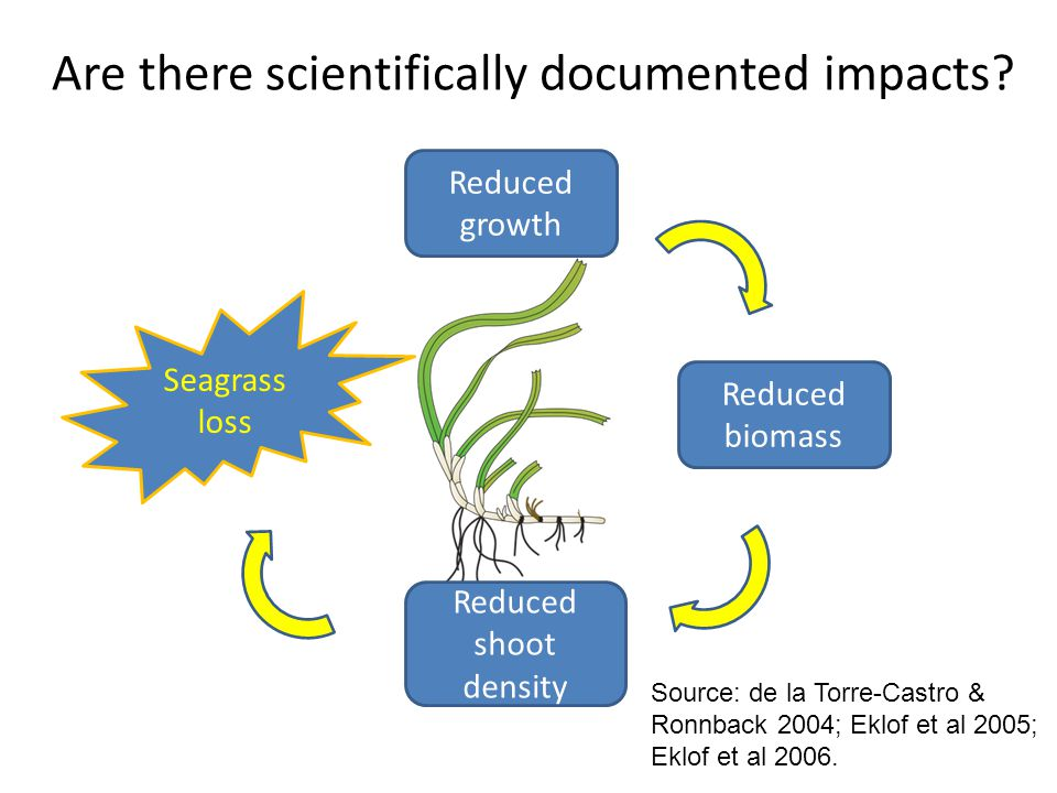 Are there scientifically documented impacts.
