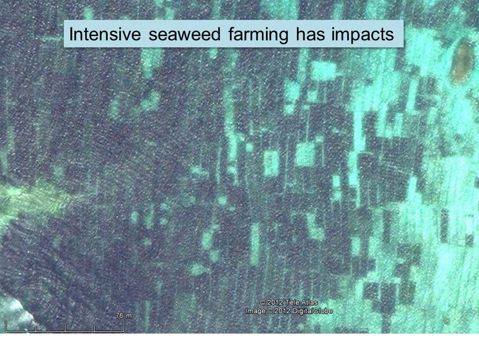 Intensive seaweed farming has impacts